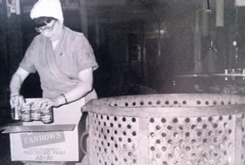 Alicia Vendenthoren at Farrows peas cannery, 1960s.